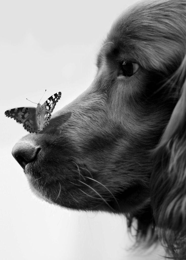 ik heb voor dit plaatje gekozen omdat er in mijn boek ook een hond voorkomt