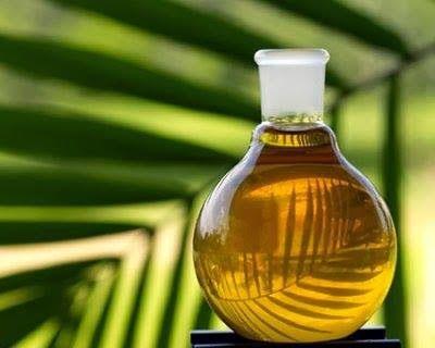 Sapori Vegani: Perché diciamo NO all'olio di palma!!