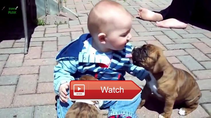 🐬 Funny Baby Animal Videos beautiful Compilation You Tube 🐧 Funny pugs compilation Try not to laugh Funny videos Check out these cute and…