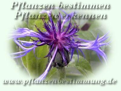 Pflanzenbestimmung