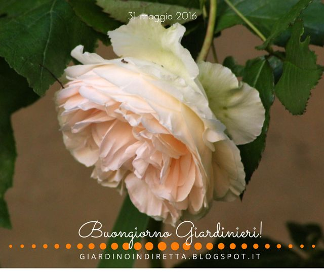 1379 migliori immagini un giardino in diretta su pinterest for Fiori dalla a alla z