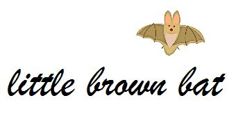 Halloween's  Spooky Words: Small Brown, Early Elementary, Brown Bats, England States, Hallows Eve, Halloween Spooky, Insects Decline, Elementary Ideas, Birds Decline