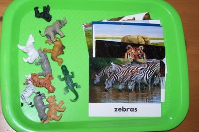 Matching toy animals to life-like photos with labels.  R2 Vocabulary and/or Comprehension - concrete symbolic