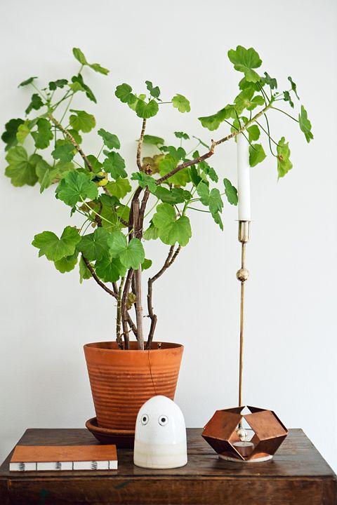 kruka växt stilleben