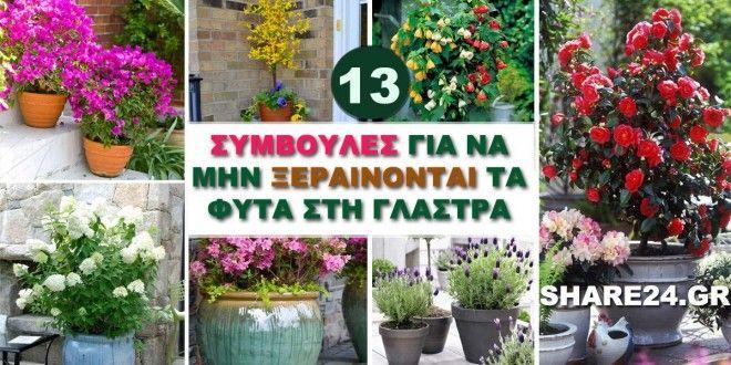 13 Συμβουλές Για να Μην Ξεραίνονται τα Φυτά στη Γλάστρα!
