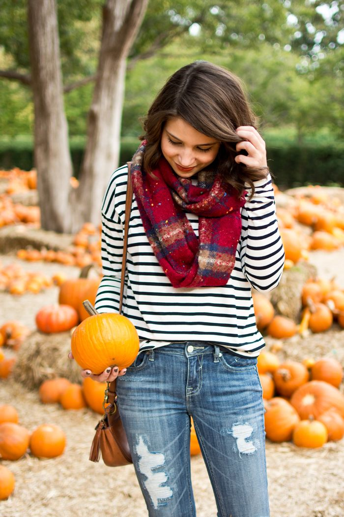 top 25 best pumpkin patch ideas on