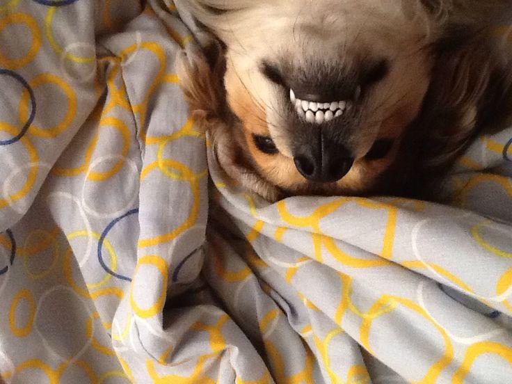 Sonrisa para la cámara