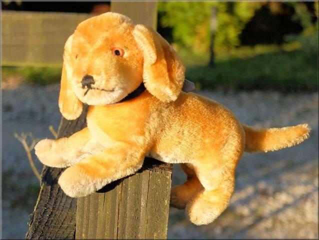 Adorable old Steiff daxi for sale at www.oldteddybearshop.co.uk
