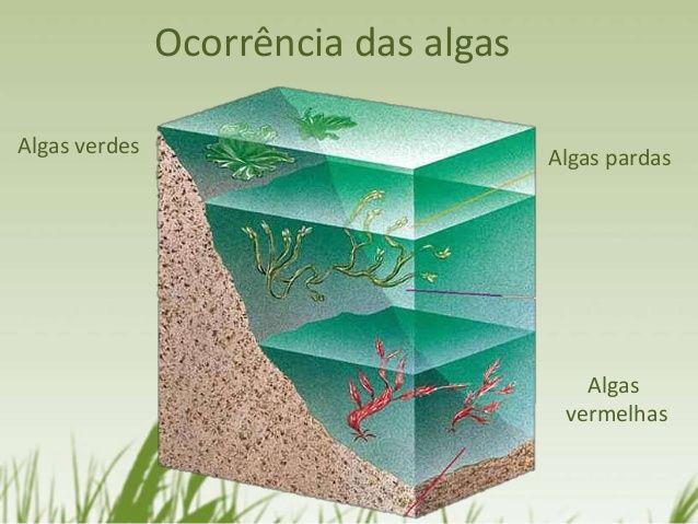 Ocorrência das algas Algas verdes Algas pardas Algas vermelhas