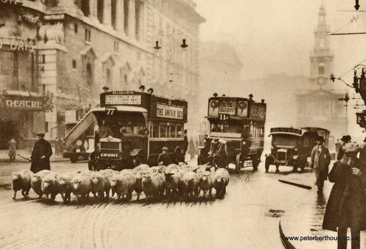Sheep being driven down Strand about to cross Waterloo Bridge, c1938. London