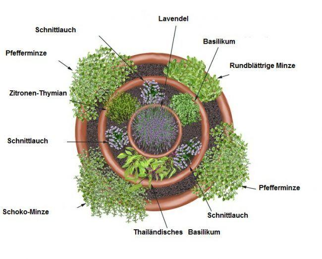 Kräuterspirale anlegen Bauskizze-Gartenplan-Gewürze-Sonne-Schatten