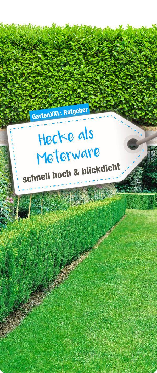 Hecke Als Meterware Schnell Hoch Und Blickdicht Hecke Garten