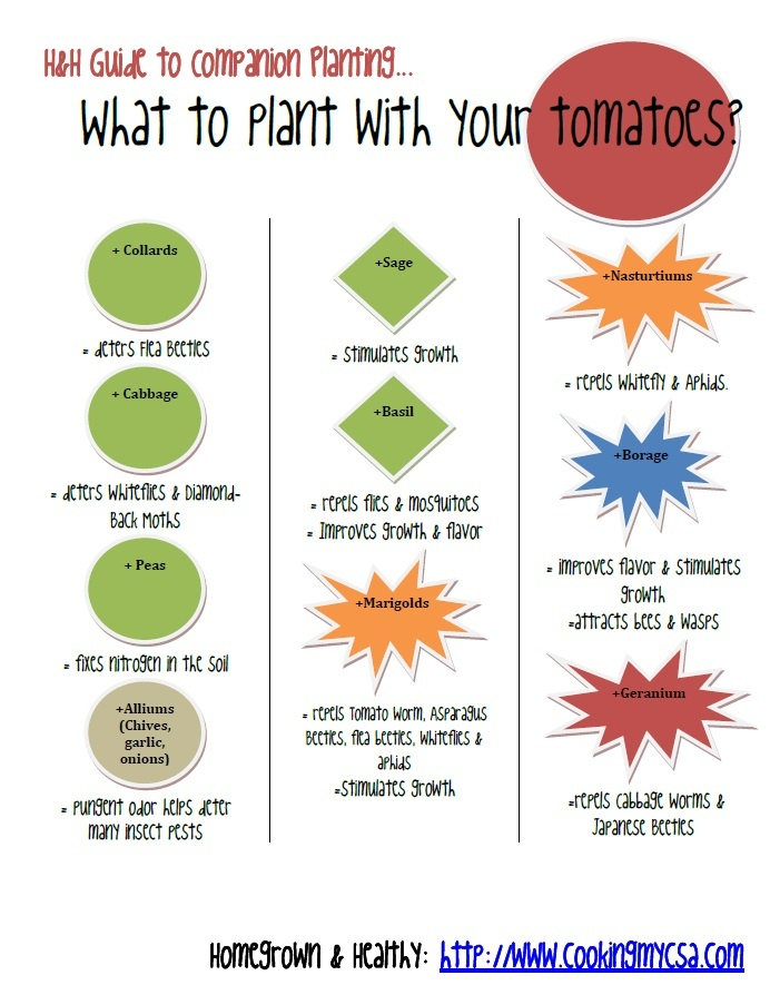 31 Best Images About Companion Planting For Tomatoes On Pinterest
