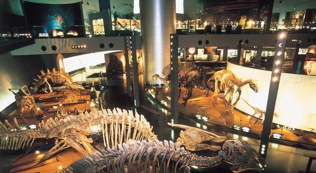 **福井県立恐竜博物館 | 9:00~17:00 入館は16:30まで 年末年始(12月29日~1月2日)、第2・第4水曜日 ※展示替えや施設点検のため、月2回程度臨時休館することがあります。// http://www.dinosaur.pref.fukui.jp/ //