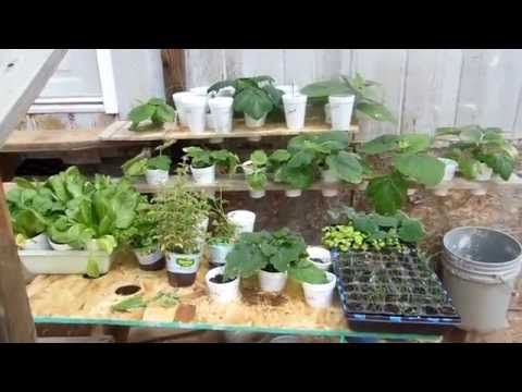 Hydroponic plants hardened off and ready to transplant to life in the ground - YouTube