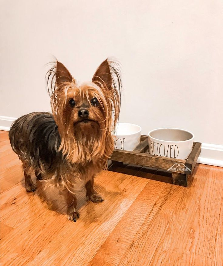 Dog bowl stand small dog or cat elevated dog food stand
