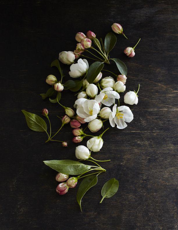 Stolen flowers.