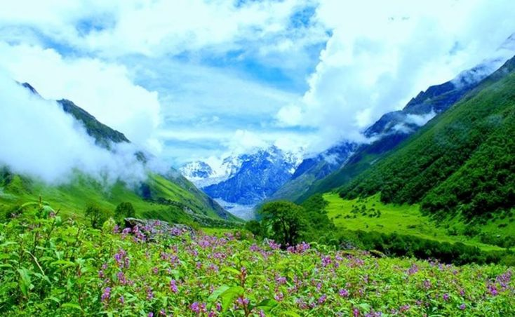 With Valley of Flowers Trek 2016, whisk yourself away to a dewy land that welcomes you with myriad of vibrant flowers dotting a carpet of green.