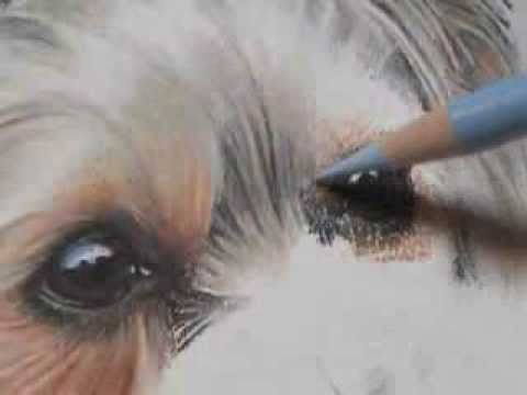 "Pastel Demonstration - Yorkie by Roberta ""Roby"" Baer PSA"