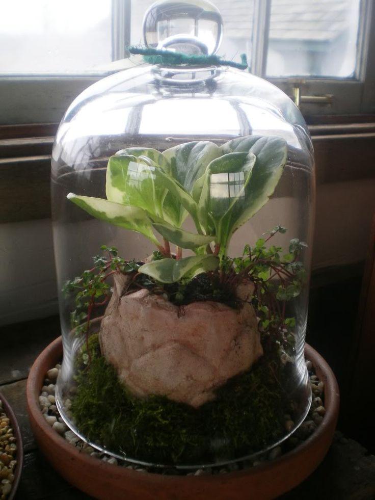 Terrarium Ideas And Inspiration Easy Diy Ideas For Indoor