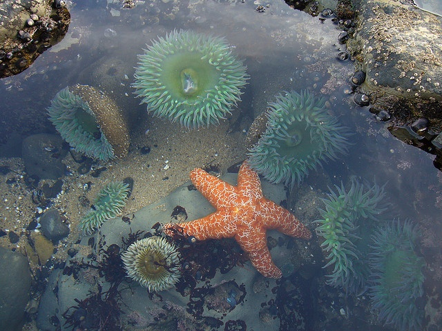 Tide pools Santa Cruz CA. They're never like thus when I go :(.