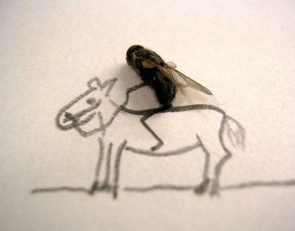 Flies Jockey...