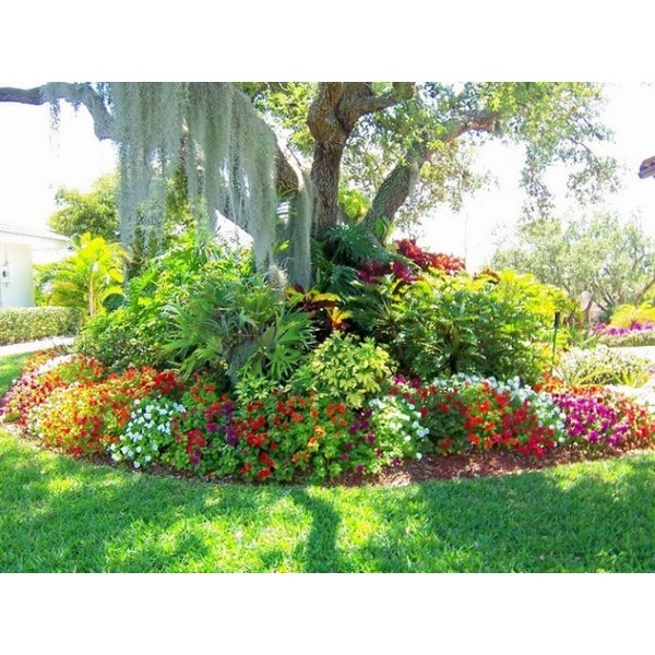 Best 25 small tropical gardens ideas on pinterest for Exotic garden designs