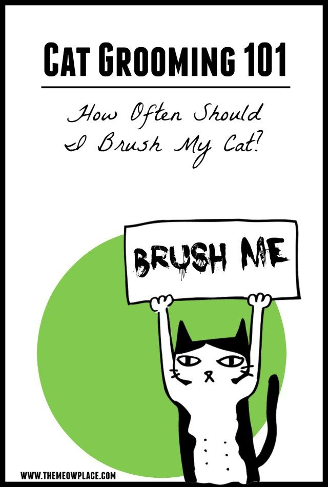 What happens if you don't properly groom your cat? You won't like the answer…