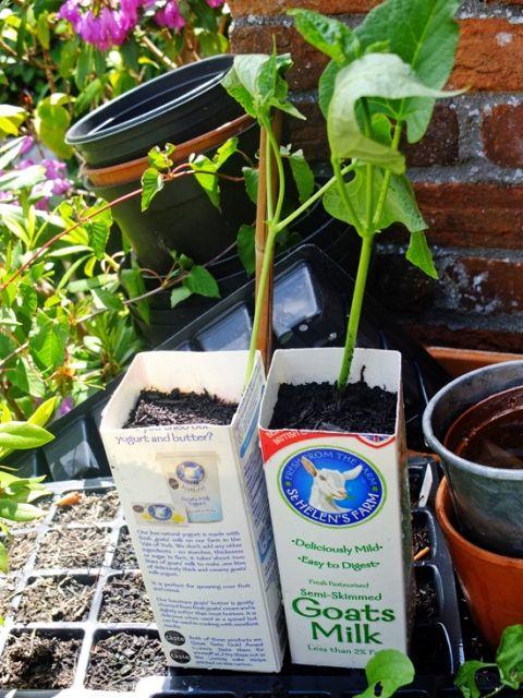Milk-Carton-Plant-Pots-3