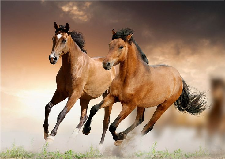 Water Horse Horses Cool Wallpapers For Phones Horse Wallpaper