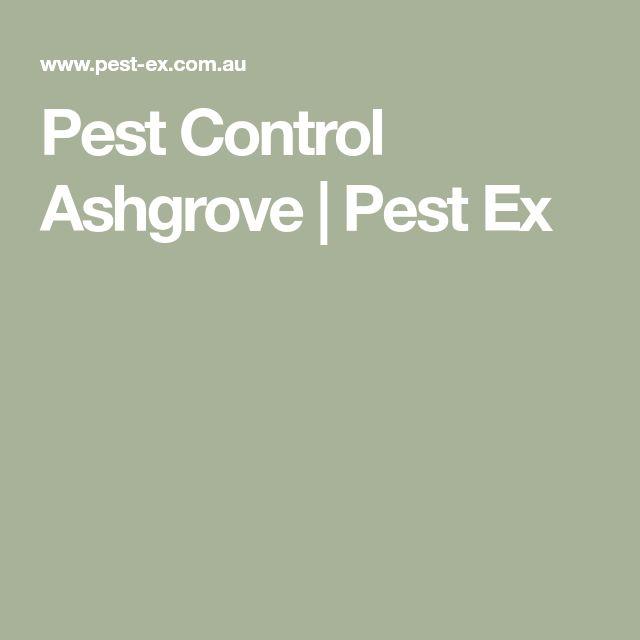 Pest Control Ashgrove | Pest Ex