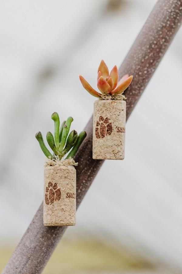 These Miniature Planters Combine Your Love Of Plants And Wine Attached To Magnetic Wine Corks These Succulents Make Great We Succulents Wine Cork Real Plants