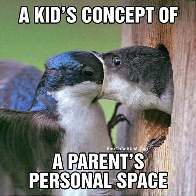 A Kids Concept Of Personal Space Toddler Humor Funny Mom Memes Mom Memes