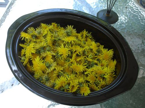 Fried Dandelions (Appalachian Style) Recipe - Allrecipes.com