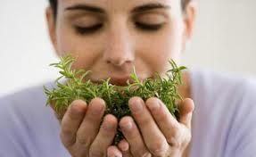 Jakie zioła pasują do drobiu?