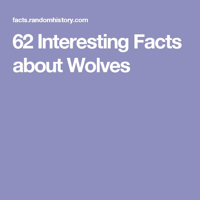 62 Interesting Facts about Wolves