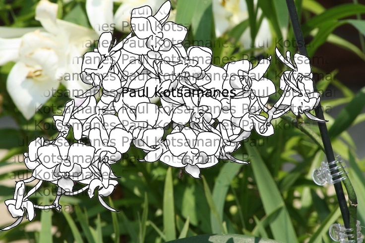 Orchid Digital Stamp (Overlayed on original Picture)