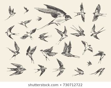 A Flock Of Birds Flying Swallows Hand Drawn Vector Illustration Sketch Flying Bird Drawing Birds Flying Bird Sketch