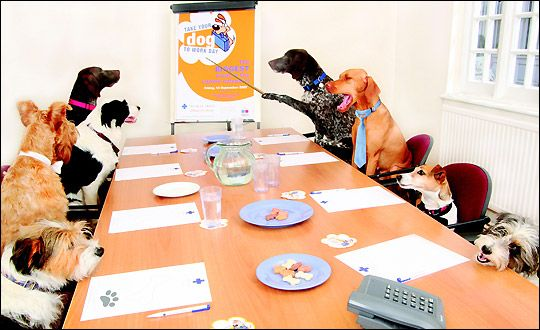 Here Are the 12 Most Pet-Friendly Companies -