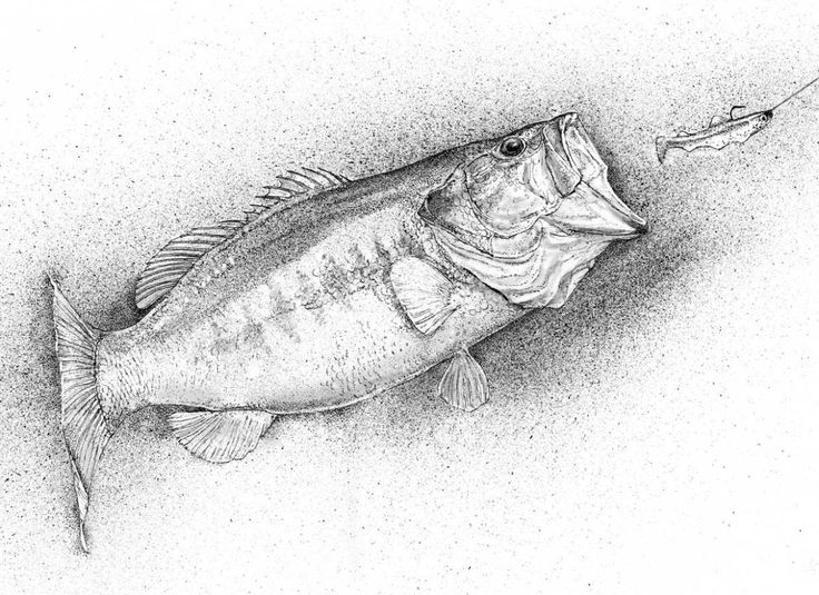 black and white drawing of largemouth bass fish art