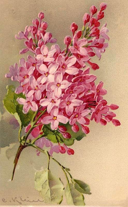 Free freebie printable Catherine Klein pink lilacs. Lots more Klein images here!