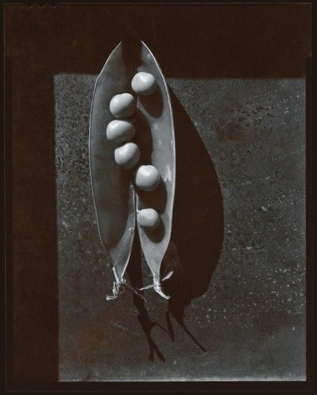 Pea Pod, Olivia Parker 1976  How could this be better.?