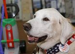 STATEN ISLAND, N.Y.-- Sambro -- the therapy dog who bestowed serenityonhundredsof people seeking refuge from the travails of human life at Staten Island University Hospital, nursing homes and other facilities -- died on Tuesday at the age of 13. After...