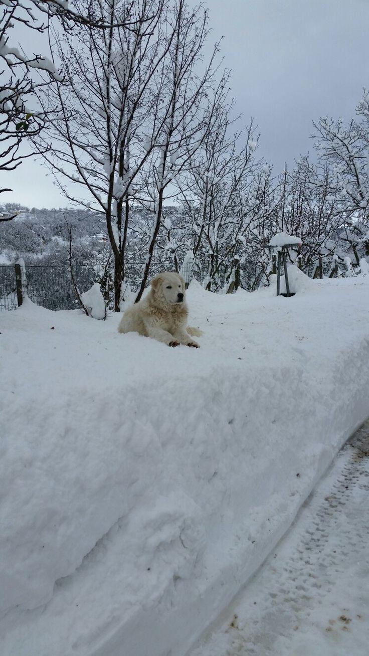 Zeus, adora la neve