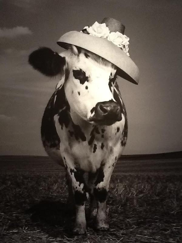 ça va la vache!