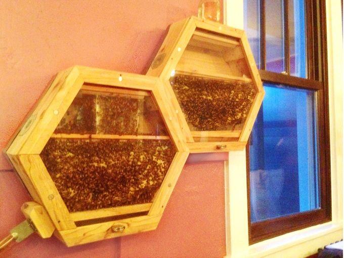 Les 25 meilleures id es concernant apiculture sur for Abeilles dans la maison