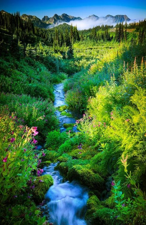 """Paradise Stream"" by Inge Johnsson. Paradise Creek in Mount Rainier National Park ~Our Beautiful World~"