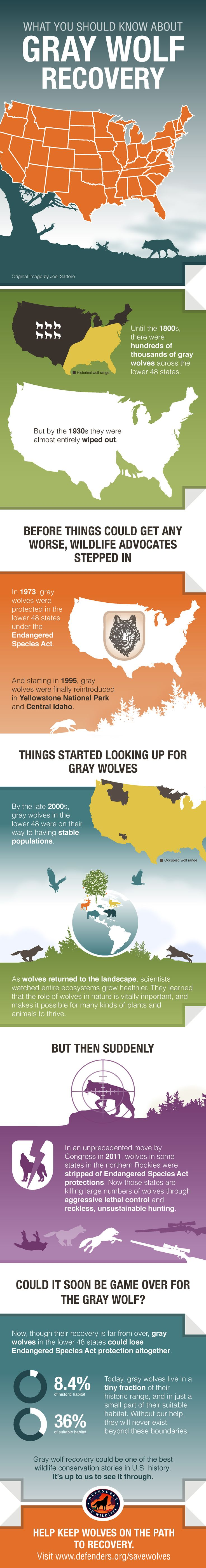 Gray wolf recovery could be one of America's best wildlife conservation success stories – but only if we see it through.