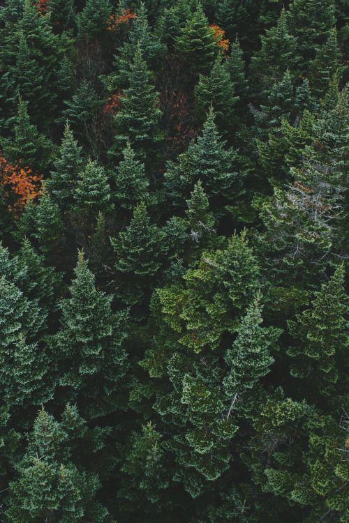 wildesdorian: lvndscpe: Forest | by Noah Silliman Nature