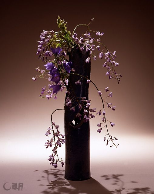 The base color of the arrangement is purple, my favorite flower. It tells us that summer is approaching. The neatened wisteria flowers enhance the linear beauty of the vine. Material:Wisteria, Bellflower Container:Ceramic vase #ikebana #sogetsu